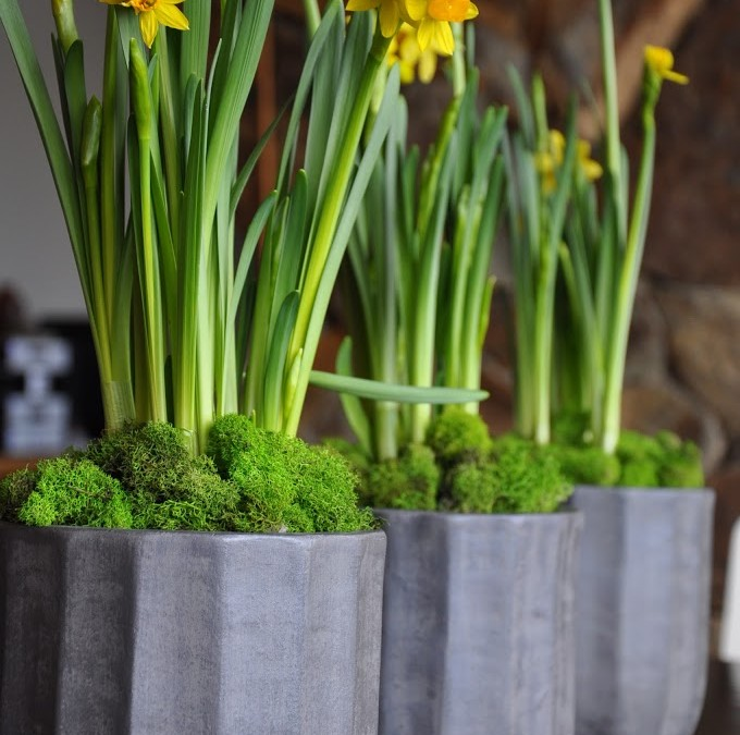 Center pieces – DIY Daffodils