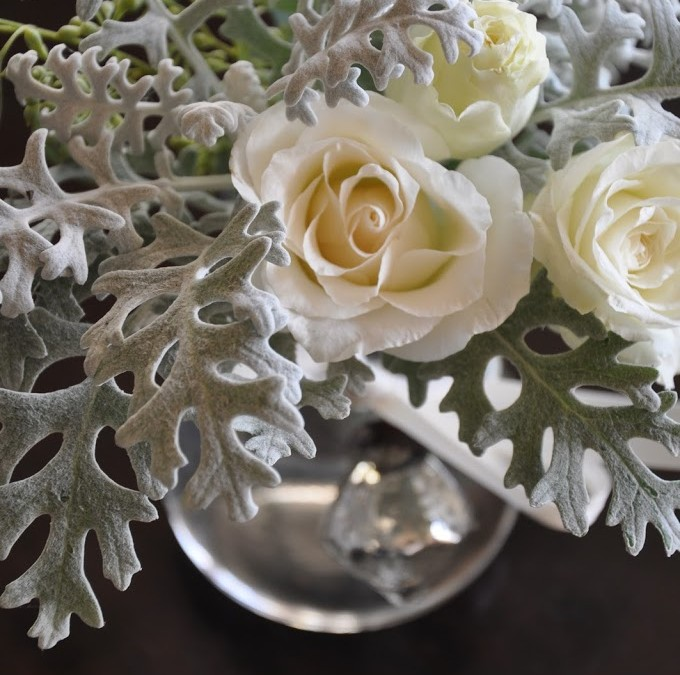 Cream Roses with Dusty Miller
