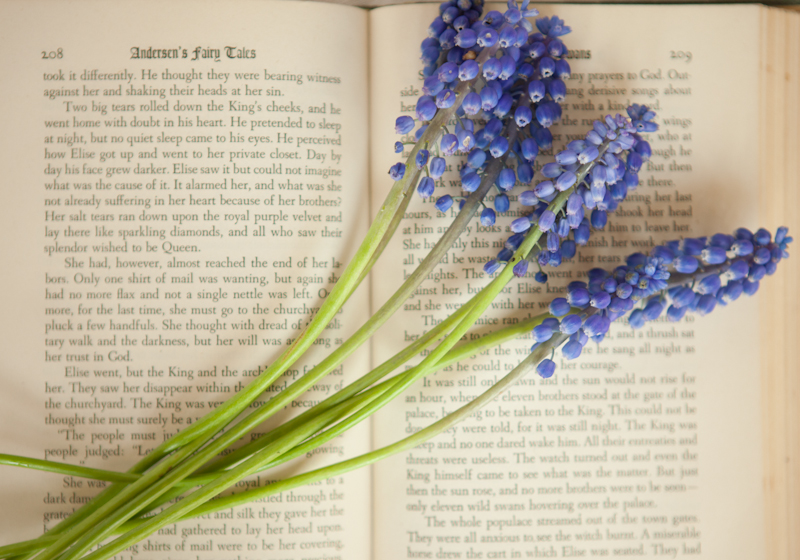 Flower Friday – Muscari
